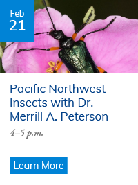 Pacific Northwest Insects with Dr. Merrill A. Peterson