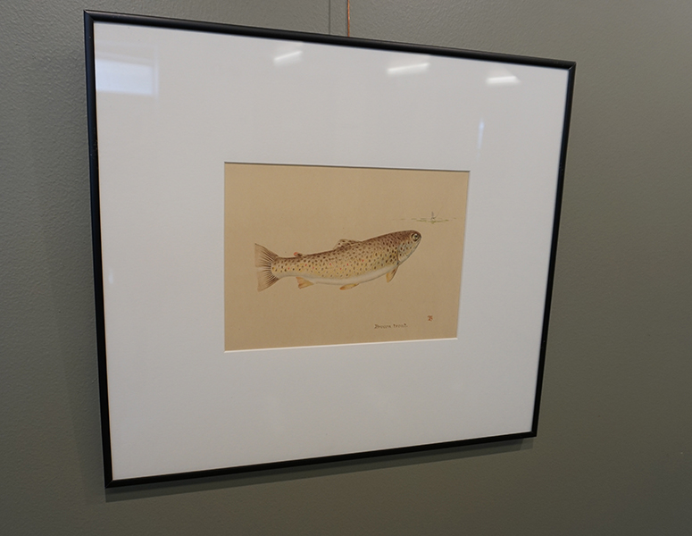 Image of pastel work of Brown Trout by Tommy Brayshaw.