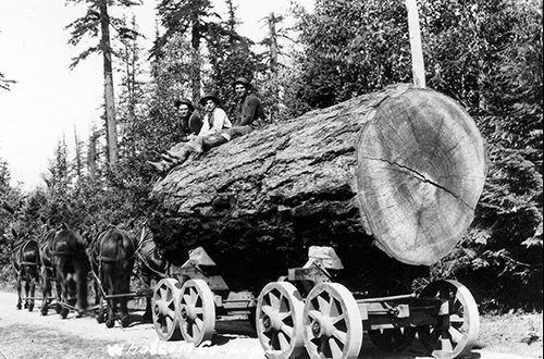 Larson Lumber Co., circa 1910, Bruce Cheever Photographs #90, CPNWS