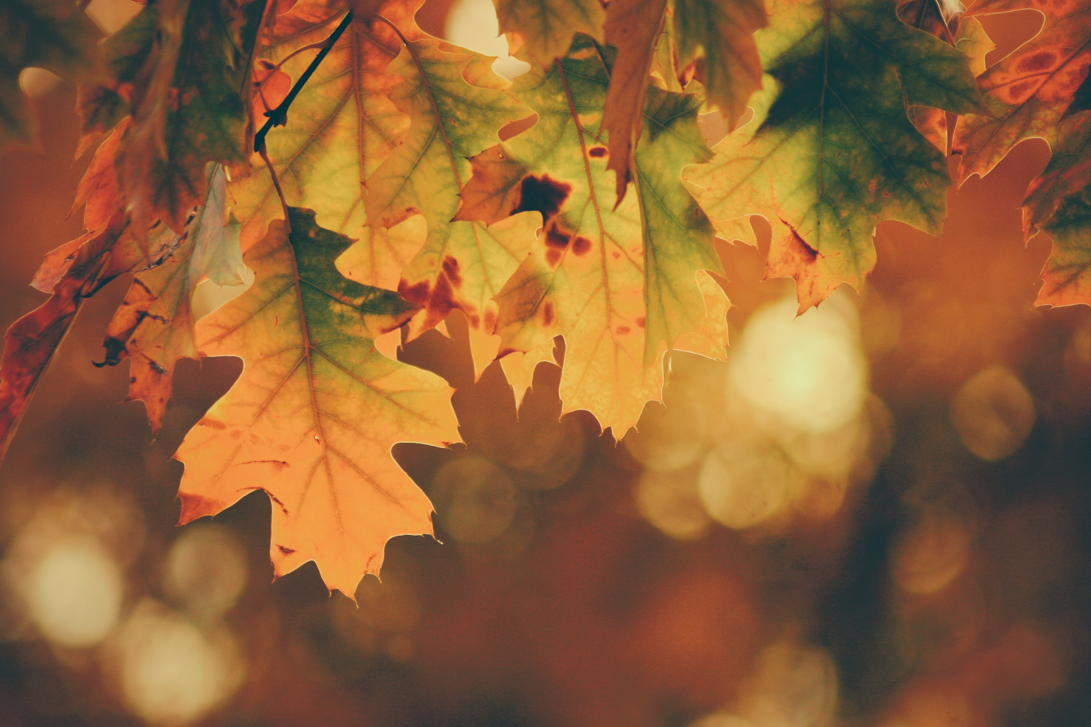 autumn leaves, orange, yellow, and green
